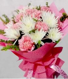 Captivating Carnation