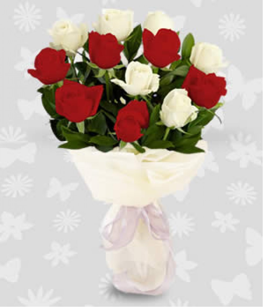Dozen of red and white roses 1 dozen of red and white roses mightylinksfo Image collections