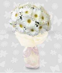 1 Dozen White Gerberas