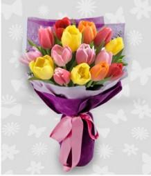 16 pcs. of Rainbow Mixed Tulips